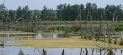 Anklam Polder, Breeding site for Black-necked Grebe, Black and Whiskered Tern.....