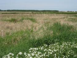Kolsow polder