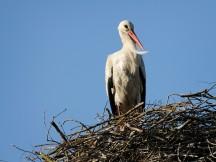 B5 White Storks_001
